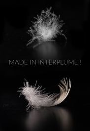 Made in ITP ! plume et duvet